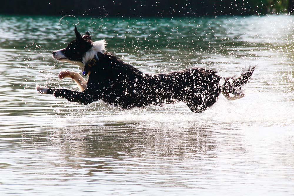 Action-Hunde-Portrait On Location