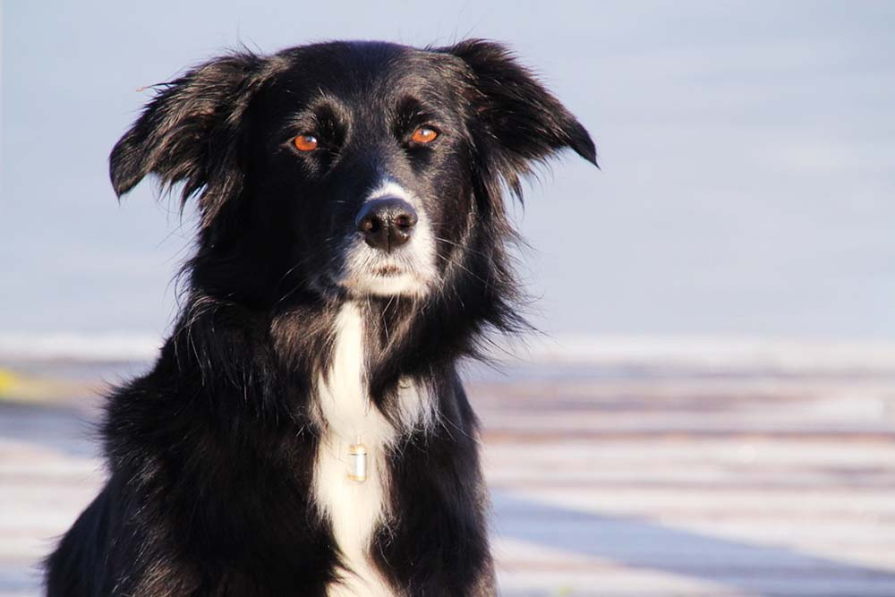 Hunde-Portrait On Location