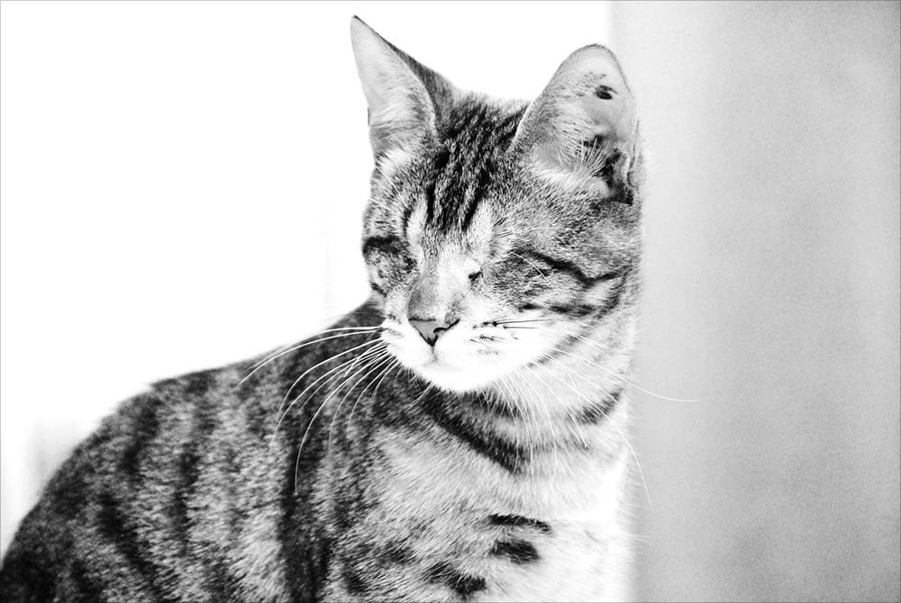 Katzen-Portrait On Location