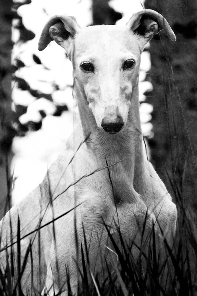 Hunde-Portrait On Location