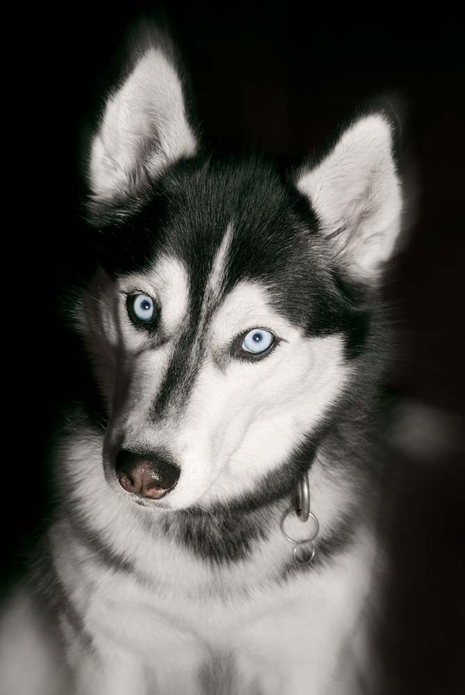 Hunde-Portrait Studio