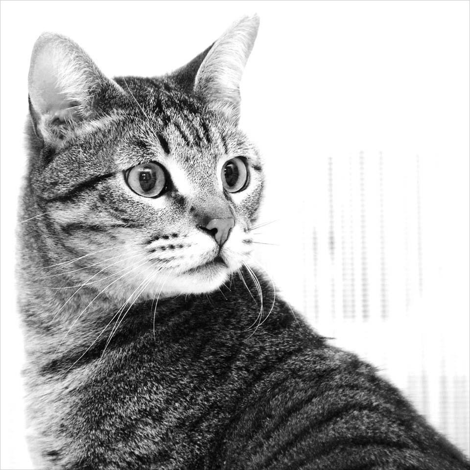 Katzen-Portrait On Location